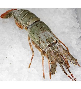 Spiny Lobster (龙虾) 350gm+-