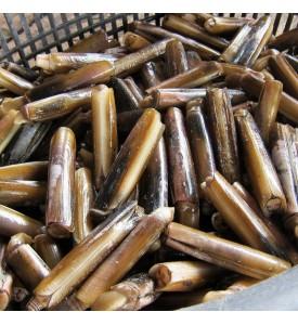 Bamboo Razor Clams (竹滩) per kg