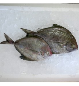 Black Pomfret per kg [SEASONAL]
