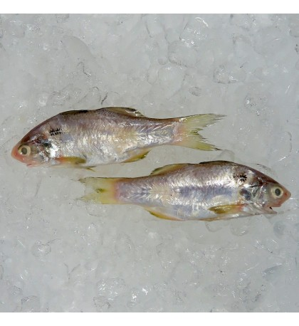 Blackspot Threadfin (米午) per kg [SEASONAL]