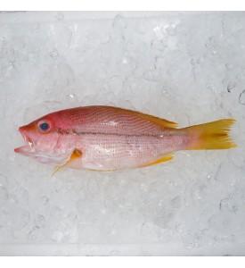 Brownstripe Snapper / Ikan Kunyit per kg