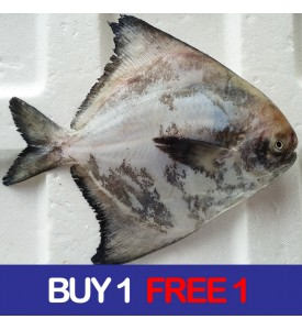 Local Chinese Pomfret (田鲳) 200gm+- per fish (BUY 1 FREE 1)