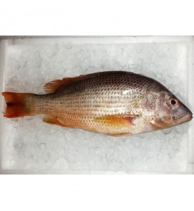 Deep Sea Snapper (上红皂) per kg [SEASONAL]
