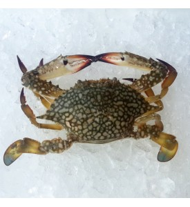 Female Flower Crab (女花蟹) per kg