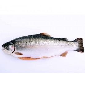 [SASHIMI-GRADE] Whole Norwegian Salmon Trout per kg