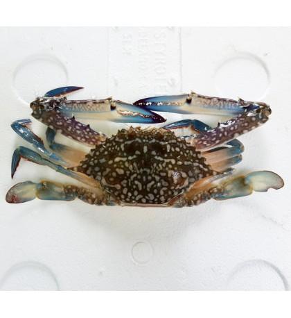 Flower Crab (大市) per kg