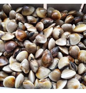 LIVE Hard Shell Clams per kg (SEASONAL)
