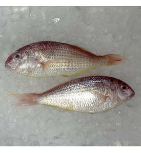 Threadfin Bream / Kerisi per kg [SEASONAL]