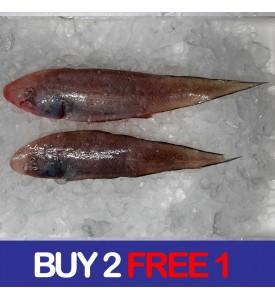 Tonguesole / Ikan Lidah (SEASONAL) per kg (BUY 2 FREE 1)