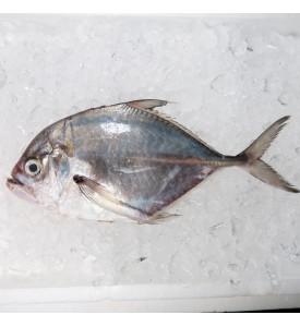 Longfin Trevally / Ikan Cermin (镜鲳) per kg