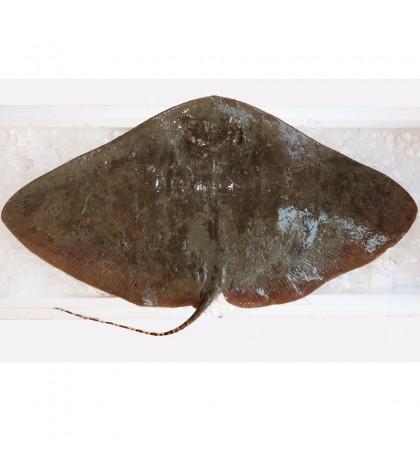Longtail Butterfly Ray / Ikan Pari {蒲鱼) per kg [SEASONAL]