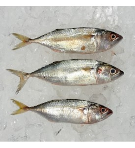 Island Mackerel / Mabong per kg [SEASONAL]