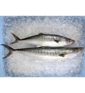 Medium Mackerel / Tenggiri (HIGHLY SEASONAL) per kg