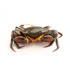 LIVE Local Mud Crab L (螃蟹) per kg (SEASONAL)
