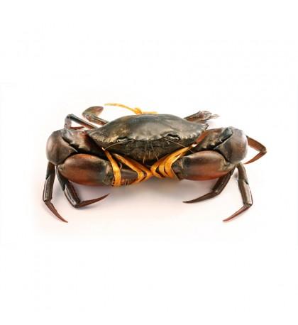 LIVE Local Mud Crab M (螃蟹) per kg (SEASONAL)