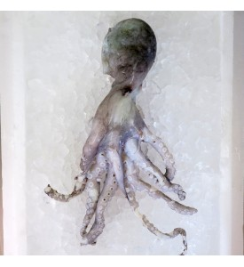 Octopus per kg [SEASONAL]