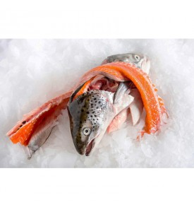 [FROZEN] Salmon Trout Head & Bones per pack