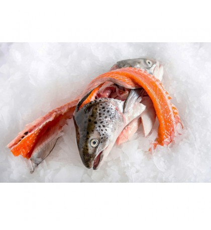 [FROZEN] Salmon Trout Head & Bones per pack