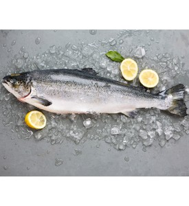 [SASHIMI-GRADE] Whole Norwegian Salmon Trout per kg