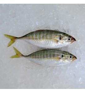 Yellowtail Scad / Selar per kg [SEASONAL]
