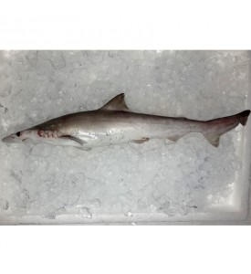 Spadenose shark / Ikan Jerung per kg [SEASONAL]