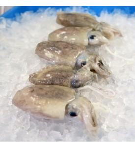 Baby Cuttlefish / Sotong Katak (目仔) per kg