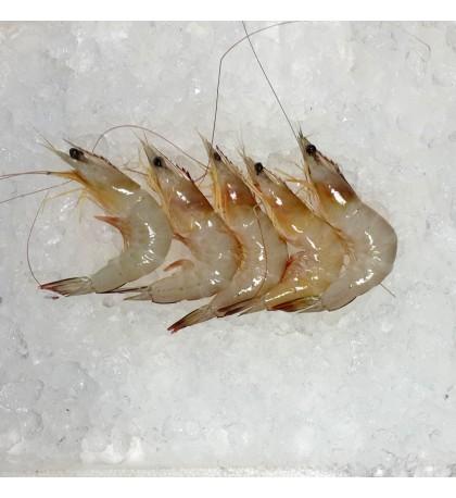 Sabah Ming Prawns (明虾) per kg [SEASONAL]