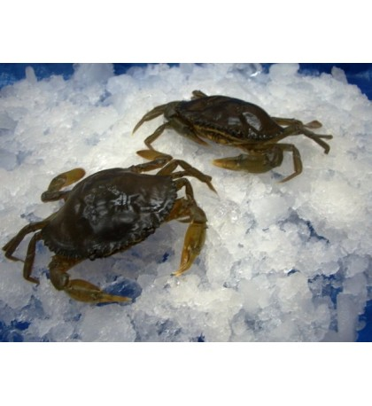 Soft Shell Crab (软壳蟹) per kg