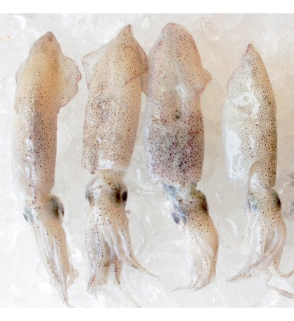 Squid M (沙中) per kg
