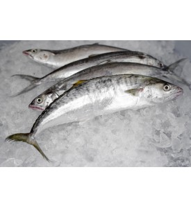 Small Mackerel / Tenggiri (SEASONAL) per kg
