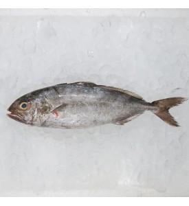 Ikan Tauhu / Ikan Haji (油甘鱼) per kg