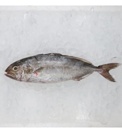 Amberjack / Ikan Aji-Aji (油甘鱼) per kg