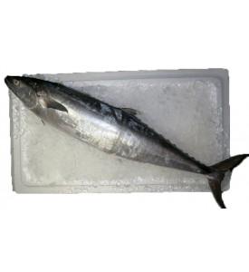 Mackerel / Tenggiri Batang (竹加) (SEASONAL)
