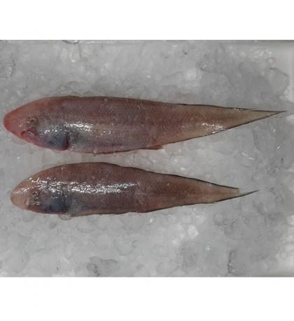 Tonguesole / Ikan Lidah (SEASONAL) per kg
